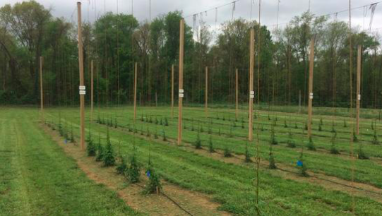 Flying Dog Brewery, University of Maryland announce partnership focused on hops production
